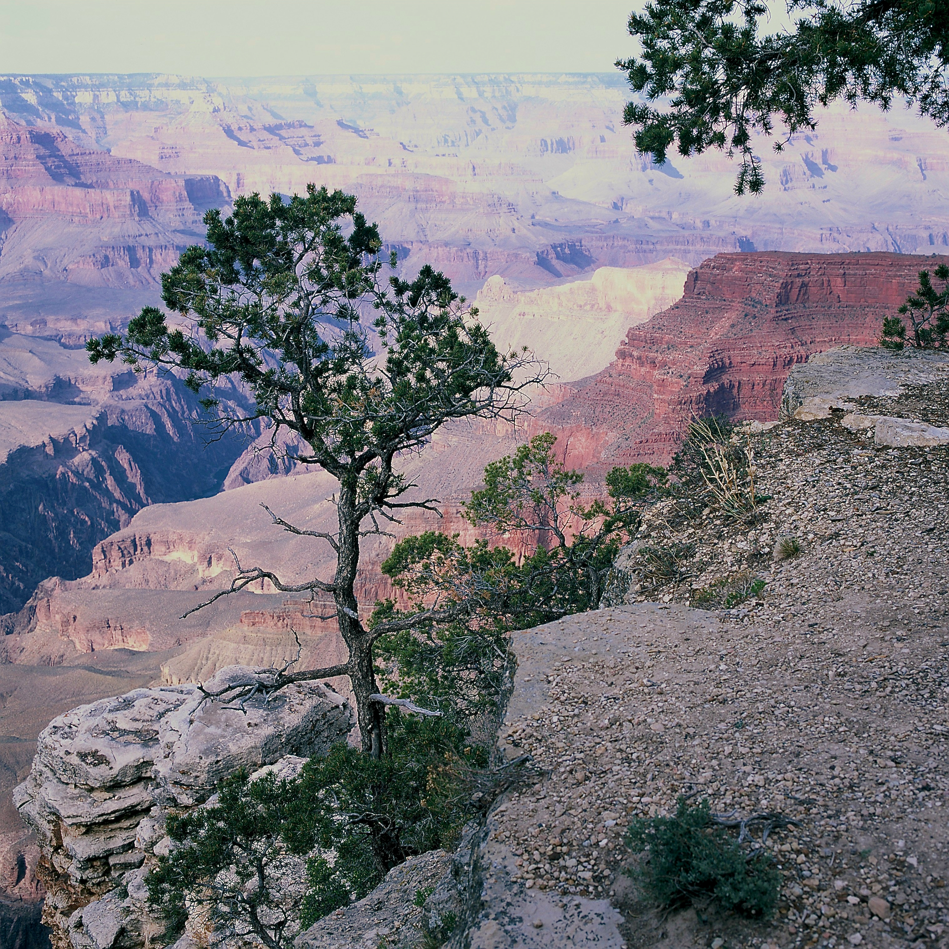 Grand Canyon Evening Hue